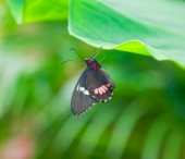 Closeup on black butterfly — Stock Photo