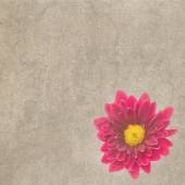 Square vintage texture with chrysanthemum — Stock Photo