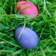 Violet and pink eggs in the grass — Stock Photo #68937965