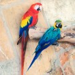 Two parrots sitting on branch in national park. — Stock Photo #57397049