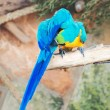 Two parrots sitting on branch in national park. — Stock Photo #57397059