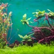 Freshwater green aquarium with plants and fishes. — Stock Photo #57397307