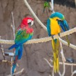 Two parrots sitting on branch in national park. — Stock Photo #57397405