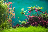 Freshwater green aquarium with plants and fishes. — Stock Photo