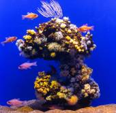 Freshwater blue aquarium with plants and fishes. — Stock fotografie