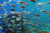 Plenty of fish in the depths of the sea. — Stock Photo