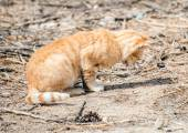 Portrait of dirty stray feral cat outdoors. — Stock Photo