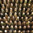 Pile of very old dusty wine bottles. — Stock Photo #66939257