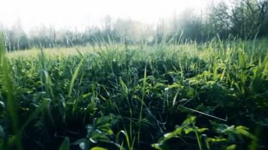 Camera flight over green grass. Slow motion. — Stock Video