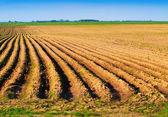 Spring plowed field — Stock Photo