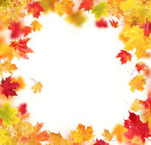 Autumn leaves isolated on white background — Stock Photo