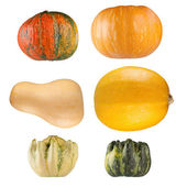 Collection of pumpkins on white background — Stock Photo