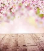 Spring background — Fotografia Stock