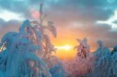 Snowy winter landscape in sunset — Stock Photo