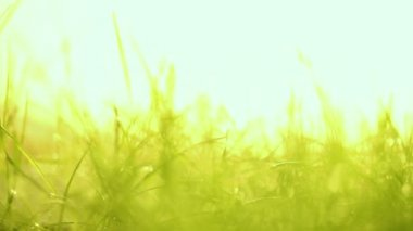 Lawn — Stock Video