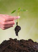 Woman hand seeding young plant into pile of soil — Stock Photo