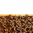 Bees on honeycomb — Stock Photo #77818554