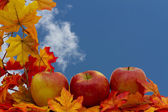 Colorful Fall Border — Stock Photo