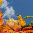 Colorful Fall Border — Stock Photo #59210499