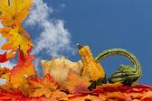 Colorful Fall Border — Stockfoto