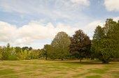 Parkland in autumn — Stock Photo