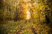 Landscape - road in the autumn forest — Stock Photo