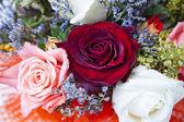 Rosebuds closeup — Stock Photo