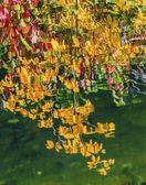 Yellow Leaves Fall Colors Reflection Wenatchee River Valley Near — Foto Stock