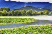 Lotus Garden Reflection Summer Palace Beijing, China — Stock Photo