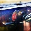 Постер, плакат: Fear Chinook Coho Salmon Close Up Issaquah Hatchery Washington S