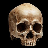 Skull without jaw — Stock Photo