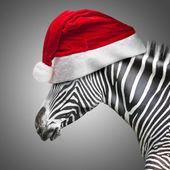 Portrait of zebra — Stock Photo