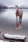 Häst i vattnet — Stockfoto