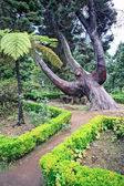 Pathway in tropical park — Stock Photo