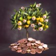 Money tree picture — Stock Photo #63901343