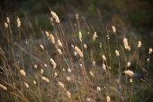 Flower meadow at sunset — Stock Photo