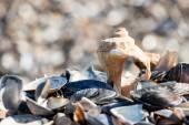 Оболочки на пляже - копией пространства — Стоковое фото