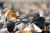 Shell on the beach - copy space — Stock Photo