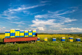 Beehives at flowering field of colza outdoors in spring — Stock Photo