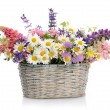 Basket with wildflowers — Stock Photo #73571849