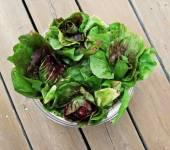 A Bowl of Fresh Radiccios or Chicories — Zdjęcie stockowe