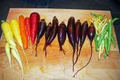 Cleaned Colorful Rainbow Carrots, Cylinder Beets and Green Beans — Fotografia Stock