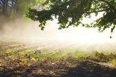 Beautiful mist on the field — Stock Photo