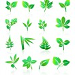 Green Leafs Icons — Stock Vector #56715603