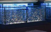 Aquaria met vissen gebruikt voor pedicure — Stockfoto