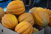 Mature pumpkins for sale — Stock Photo
