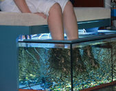 Young woman doing pedicure with fish — Stock Photo