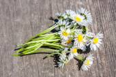 Bouquet of chamomiles — Stock Photo