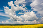 Clouds over the fields of oilseeds — Stock Photo