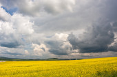 Clouds over the field of oilseeds — Stock Photo